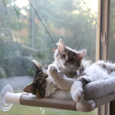 Cama para Gatos Sunny