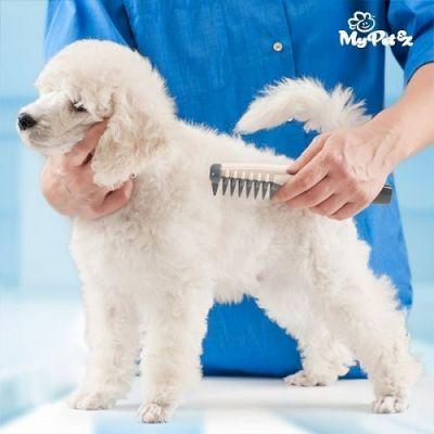 Pente Elétrico Corta-nós para Cães Comb & Cut - AN1982